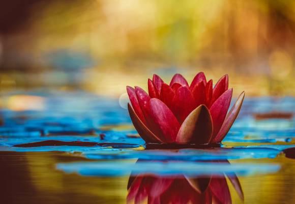 Ogni senso è solo l'apertura del loto… una Meditazione Tantrica
